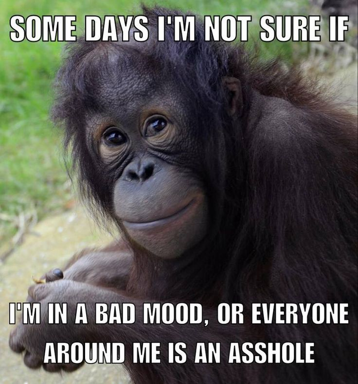 Www Facebook Com Funny Quotes Morning Quotes Funny Monkeys Funny