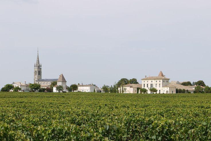 Saint-Emilion (Gironde) - Vignoble de Montagne St-Emilion