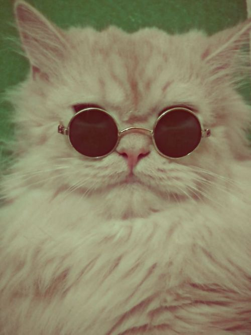 Kitty with glasses!