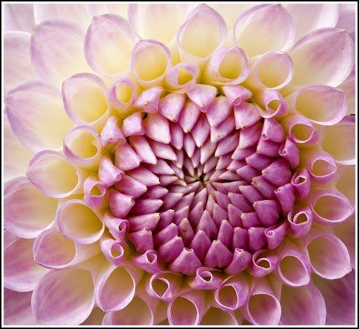 """El orden en la naturaleza no es """"ilusorio"""". La proporción áurea"""