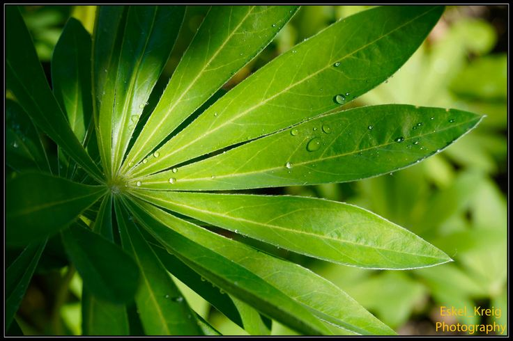 Lupin covered with water droplets by EskelKreig on DeviantArt