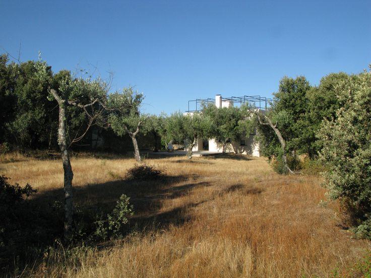 Quinta do Cuco #7