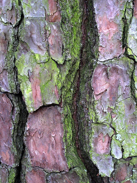 tree bark and moss  (another gorgeous color combination!!)