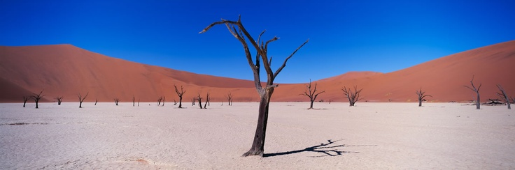 Deadvlei, Namibia by Colin Prior
