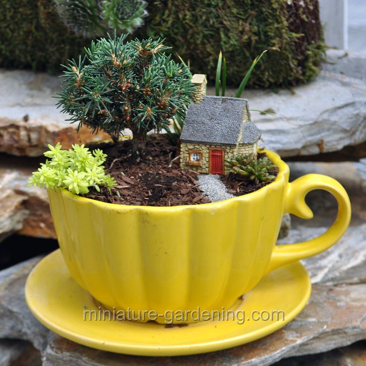 1118 best Miniature dish & fairy gardens images on ...