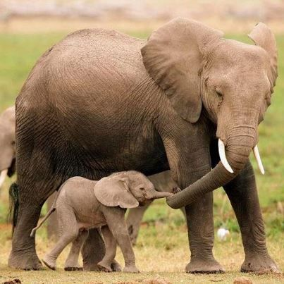 Celebrate World Elephant Day With 25 Facts About These Amazing Animals