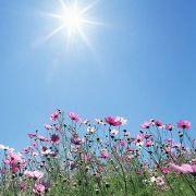 Coups de chaleur, insolation et autres symptômes de santé liés à la chaleur