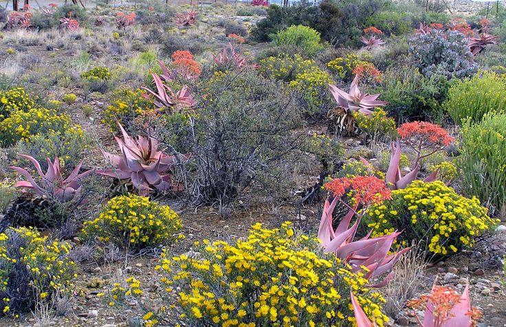 Karoo View Cottages carpet of colour
