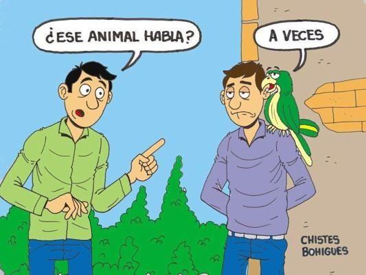 chiste grafico ese animal habla