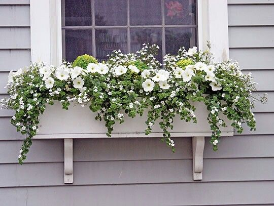 """Green and white more visible  On the """"shady"""" side of your house"""