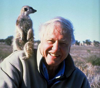Sir David Attenborough (b 1926-) - National Institution, wonderful English broadcaster and naturalist and still very busy...and everybody no matter what age - loves his programmes...