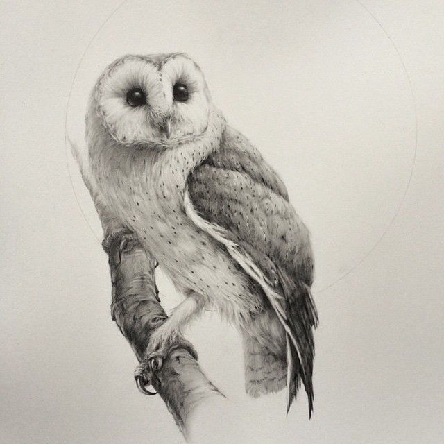 absolutely stunning barn owl drawing from artist Vanessa ...