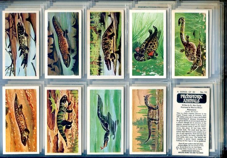 Brooke Bond Collectables - Tea Card Set Details - Prehistoric Animals