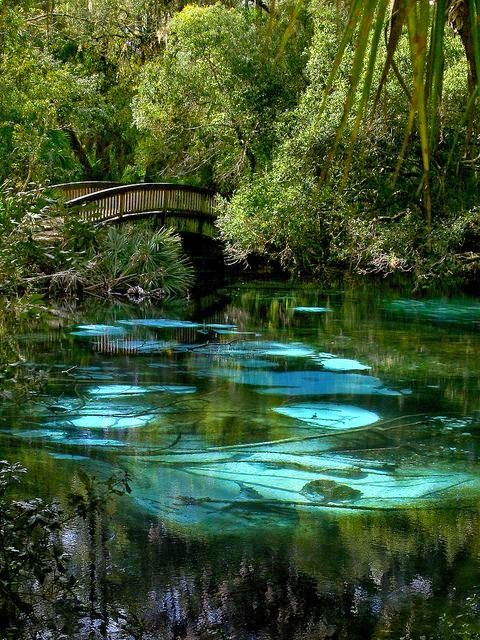 fern hammock springs in north central florida 40 best fern hammock springs images on pinterest   ferns hammock      rh   pinterest