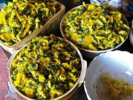 vino tarassaco - fonte foto: webecoist.momtastic.com