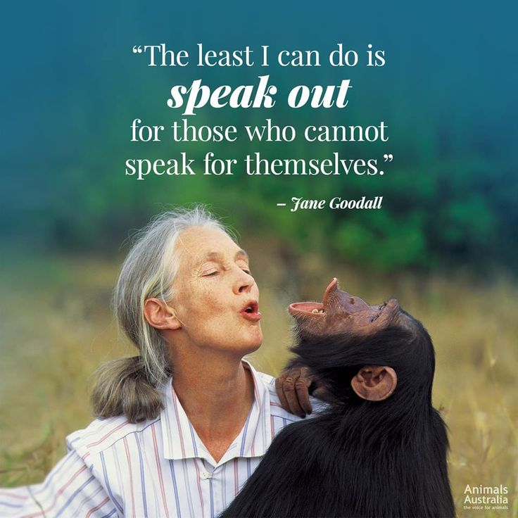 Jane Goodall Quotes: Best 25+ Quotes About Compassion Ideas On Pinterest