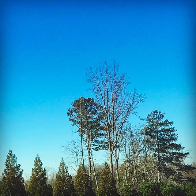 1.28.17 // I won't be home for the sunset today, but here is a perfectly blue sky instead... ☺ • • • • #everydaysunset2017 #sunset #diy #etsy #homedecor #iphonephotography #photochallenge #photoaday #picoftheday  #gaphotographer #trees #beauty #beautiful #sky #nature #instasunsets #sunsets #skylovers #blueskies