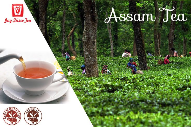 Surrounded by the beauty of nature, lies the tea gardens of #Assam, serving its world famous tea to millions of people all over the world. #TeaProduction in Assam is said to have started about 165 years ago on either sides of the Brahmaputra River, giving the tea a bold malty, full bodied flavor.