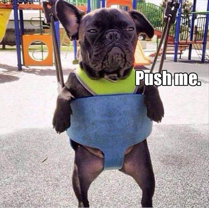 Funny Animal Pictures Of The Day – 21 Pics More
