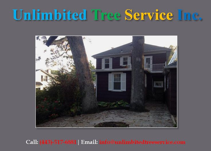 https://flic.kr/p/VXQUsB   Columbia Tree Pruning, Tree Removal and Tree Trimming Service   Follow Us : www.columbiatreeservice.co/   Follow Us : www.facebook.com/unlimbitedtreeservice   Follow Us : twitter.com/unlimbitedtree   Follow Us : followus.com/unlimbitedtreeservice