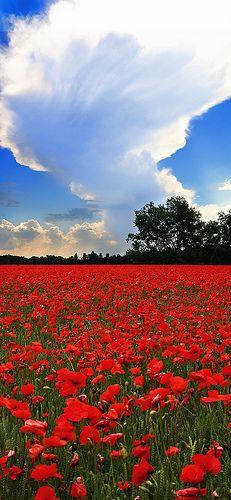 ~~Poppy's Field | Venice, Italy by Michele Catania~~
