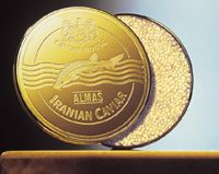 Almas caviar comes from Iran making it extremely rare and extremely expensive. The only known outlet is the Caviar House & Prunier in London England's Picadilly that sells a kilo of the expensive Almas caviar in a 24-karat gold tin for £16,000, or about $25,000.The Caviar House also sells a £800 tin for those on a smaller budget.