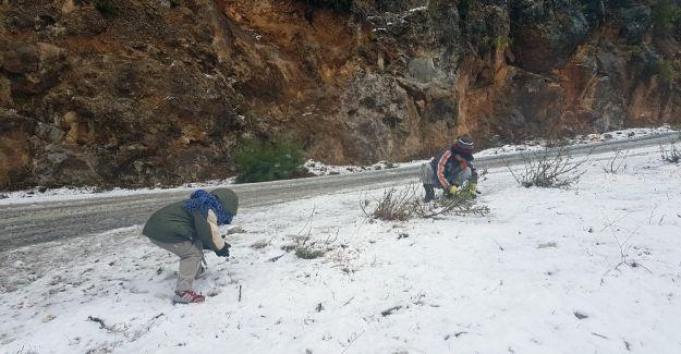 Manavgat 15 yıl sonra karla buluştu