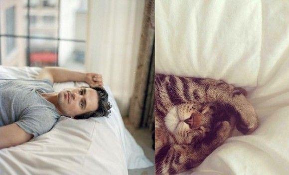 マット・ボマー VS 猫