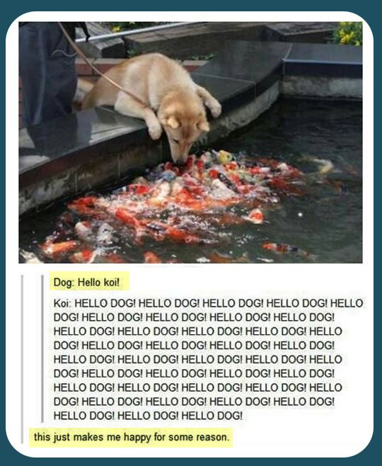 Hello koi! BAHAHAAHAHAHAHAAHAHAHAHAHAHAHAHHAHAHAHAAHSHSHAHSHAHAHAHAHAHAHAHAHAHAHAHAHAHAHAHAH IDK WHY THIS IS SO FUNNY LMFAOOOO
