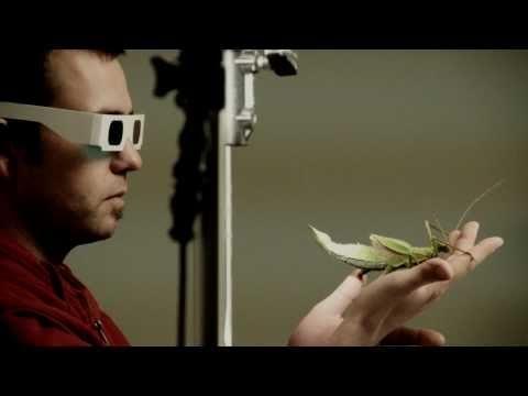 TRINSECTUM - Behind The Scenes by http://kamerawerk.ch