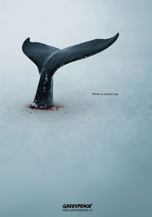 There Is A Little Left - Greenpeace Whale Protecting Poster | #greenpeace