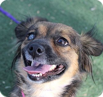 126 best dogs to adopt adoptapet petfinder petango images for Dog pound las vegas nevada