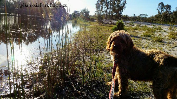 Enjoying a nice afternoon with Taylee down at the lake at Banksia Park, Stradbroke! 🐾😄