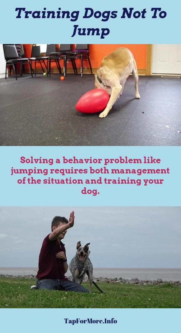 Stop Dog Jumping And How To House Train A Puppy Check Pin For