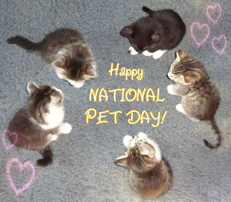 Happy National Pet Day! April 11th -Made with photo of rescue kitty Star's kittens who were all adopted :) -- kittens, cats, feline, kitties, cute, hearts, sign, april, circle, cat mom, pet parent, cat lady, cat lover, meme, photograph, pets, animals, national pet day, usa
