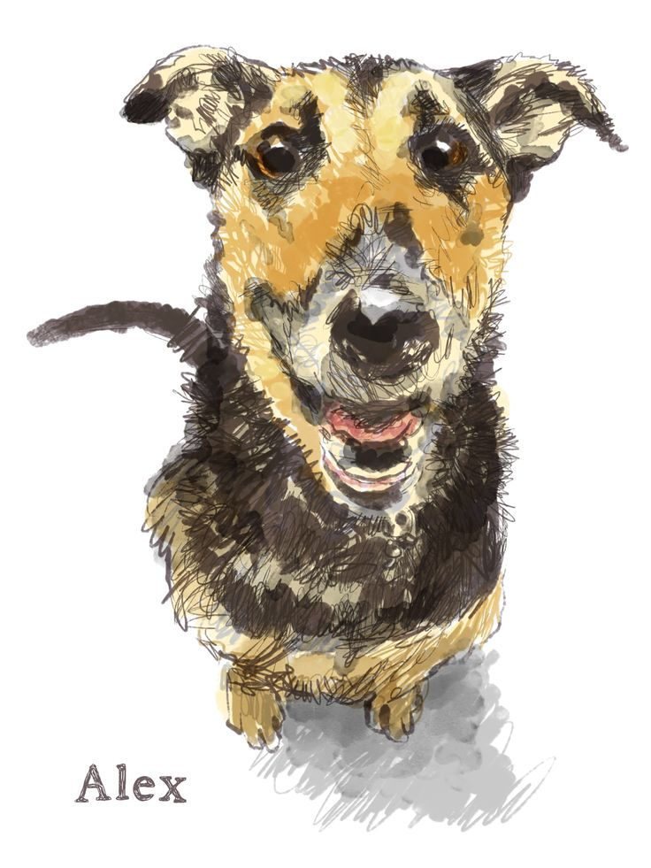 """""""In the shelter photograph, your eyes were full of languishing hope -- could it be me?...It took some weeks, but you forgot the consonant of cold captivity."""" -from """"Hounds of Wonder: A Life In Rescue Dogs by B.D. Love. Illustrations by Walt Taylor"""