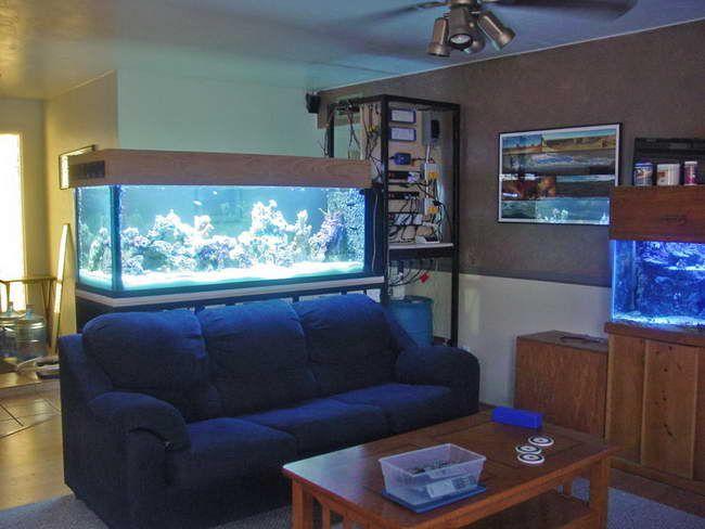 64 best aquarismo images on pinterest | aquarium ideas, aquarium