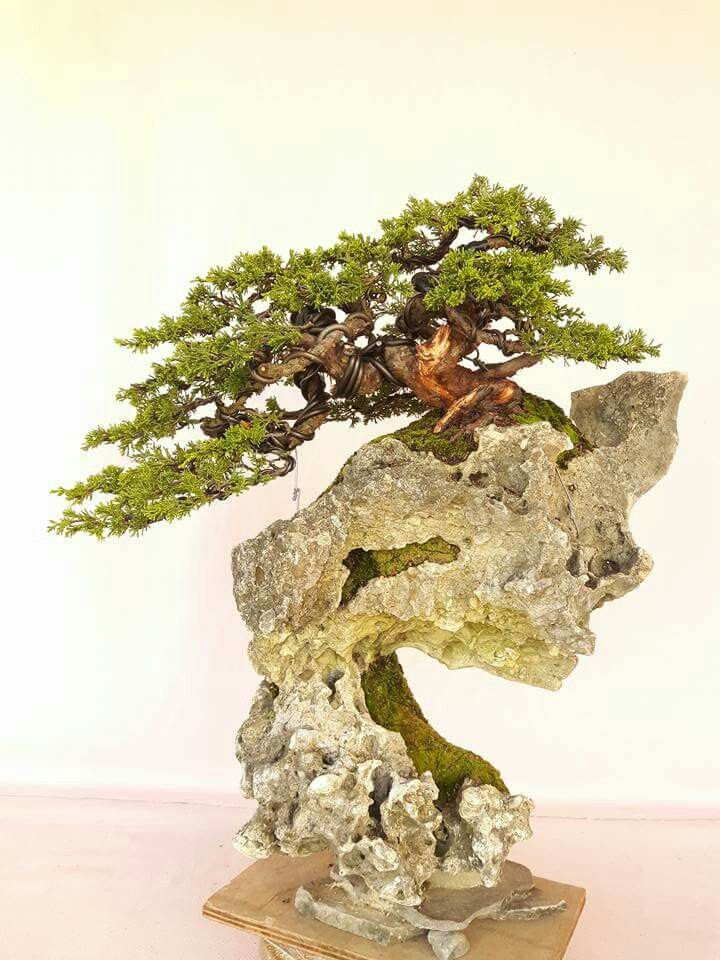 931 mejores im genes de bonsai en pinterest plantas for Bonsai de jardin