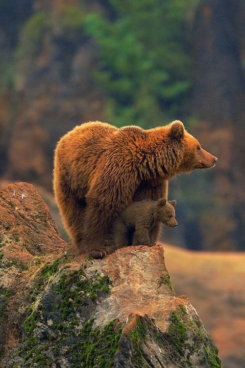 Family picture! Mama bear and baby bear