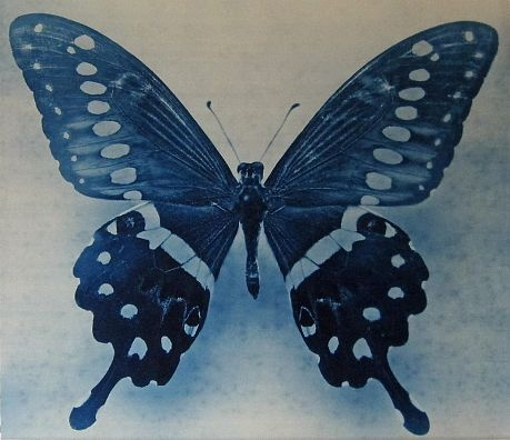 Thomas Hager-'Wing Study #1,1/12'-Sears-Peyton Gallery