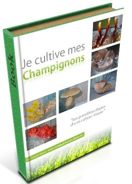 Free Online how to grow many edible mushroom instructions scientific  Liste des champignons comestibles et cultivables | Champignons comestibles