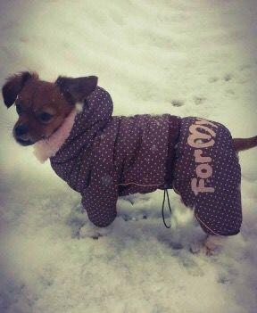 Shasta, frumoasa si cocheta in Salopeta de Iarna de la King Maru --> https://kingmaru.ro/  #hainecaini #accesoriicaini #imbracamintecaini #caine #caini #catel #catei #dog #dogs #kingmaru