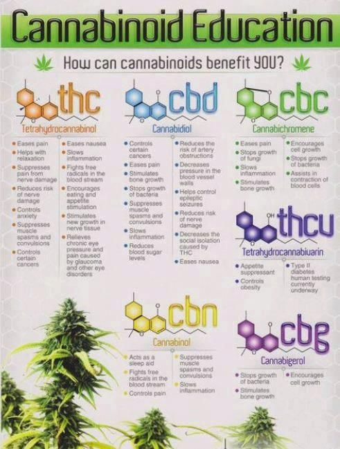 Cannabinoid Education #drugs #research #infographic #high #cannabis #SUPERHIGH