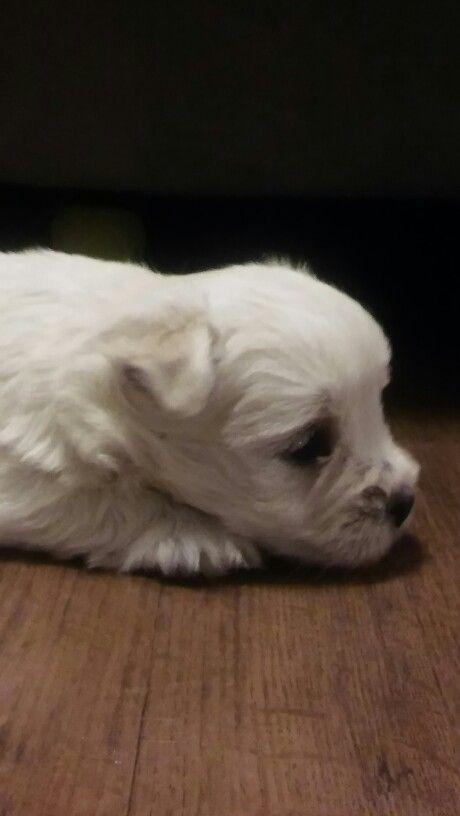 #puppies #love #sleep ❤