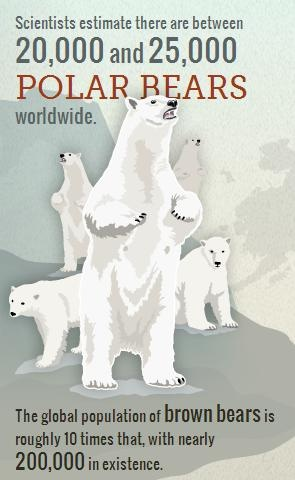 Frozen Fact: Scientists estimate there are between 20,000 and 25,000 polar bears worldwide.
