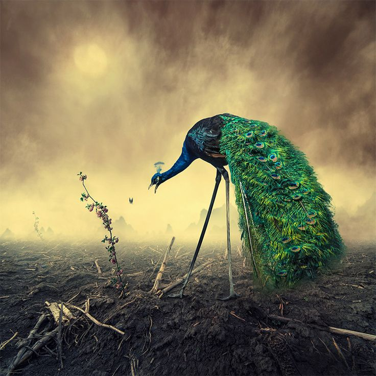Surreal Photo Manipulations by Caras Ionut