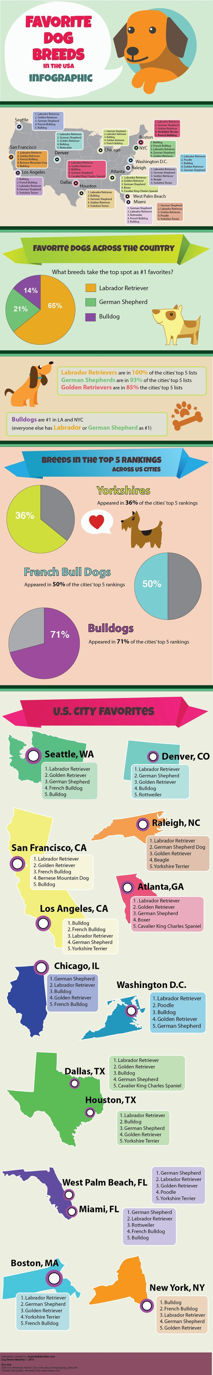 Top Dog Breeds in the USA Infographic...helpful when choosing a dog!