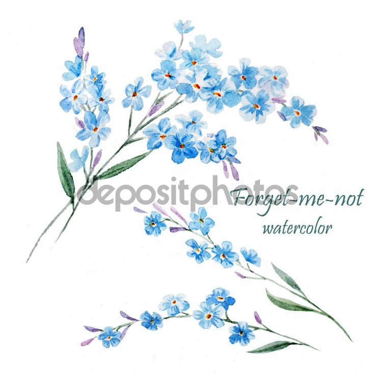 depositphotos_63271199-Forget-me-not-watercolor-painting.jpg (1024×1024)