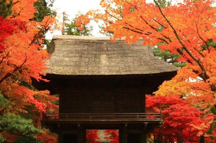 お休みなさい🌙 #平林寺#あなたに撮られたい東京 #カメラ女子#モミジ#秋 #綺麗#紅葉まつり#お寺#はなまっぷ紅葉2017#紅葉#1127 #flower_special_#reflection#beautiful#autumn #maple#autumncolors#Autumnleaves#tokyocameraclub #cannon#Lovers_Nippon#eoskissx8i#retrip_news #art_of_japan_#retrip_nippon#retrip_埼玉#wp_紅葉2017 #東京カメラ部#写真好きな人と繋がりたい #ファインダー越しの私の世界