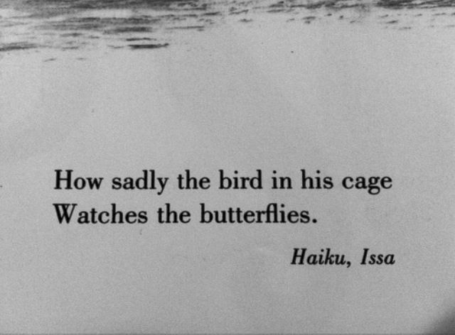"""Issa / Haiku 1823  .籠の鳥蝶をうらやむ目つき哉 ~ kago no tori chô wo urayamu metsuki kana ~ """"caged bird-- watching the butterfly with envy"""" I like this translation found in a wonderful little children's book: """"How sadly the bird in his cage/ Watches the butterflies""""; Don't Tell the Scarecrow and Other Japanese Poems (New York: Scholastic Books, 1969), unpaginated. However, urayamu connotes envy, not sadness."""